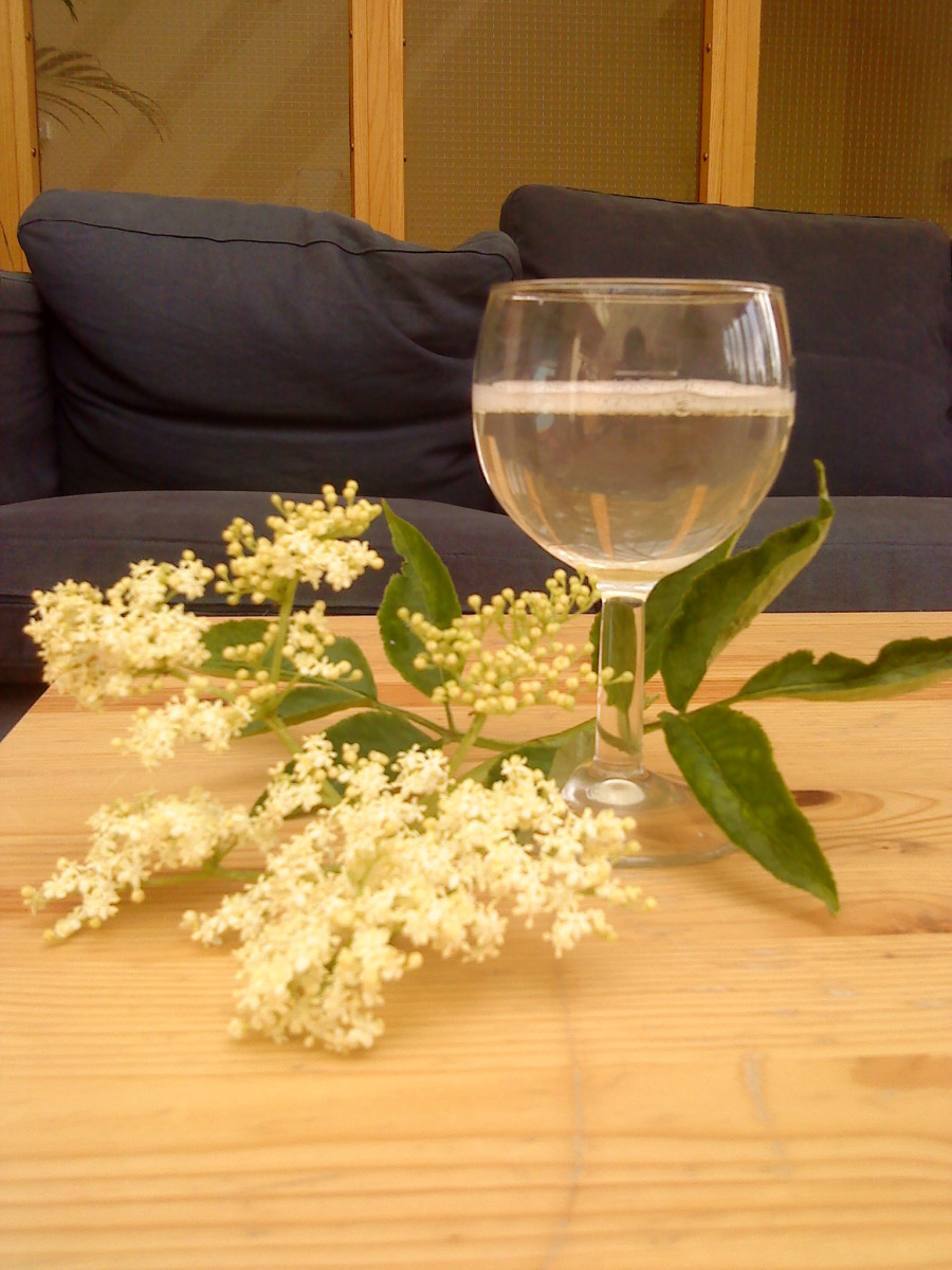 Fresh elderflower champagne.