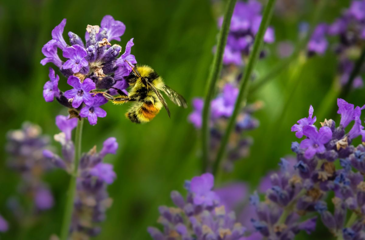How to Avoid Bee and Wasp Stings
