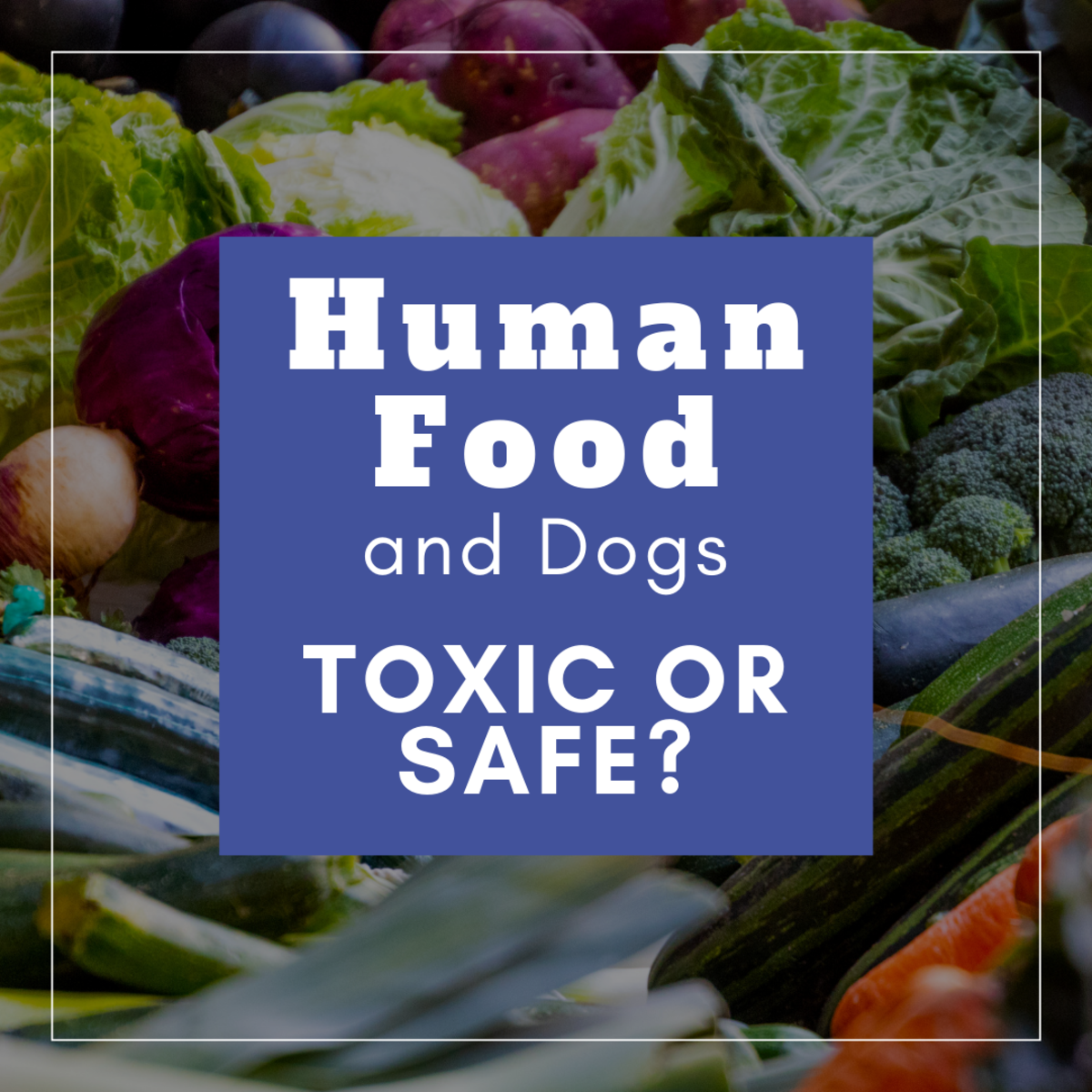 Toxic vs. Safe Foods for Dogs