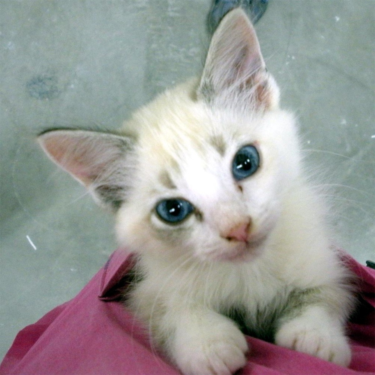 """""""Little Miss Fuzz"""" was one of our first """"foster failures.""""  She stole our hearts, so we adopted her ourselves."""