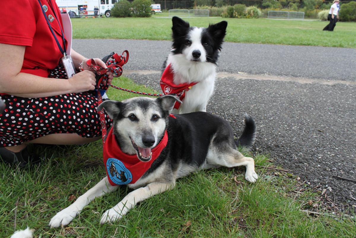 How an Epileptic Can Train a Seizure Alert Dog