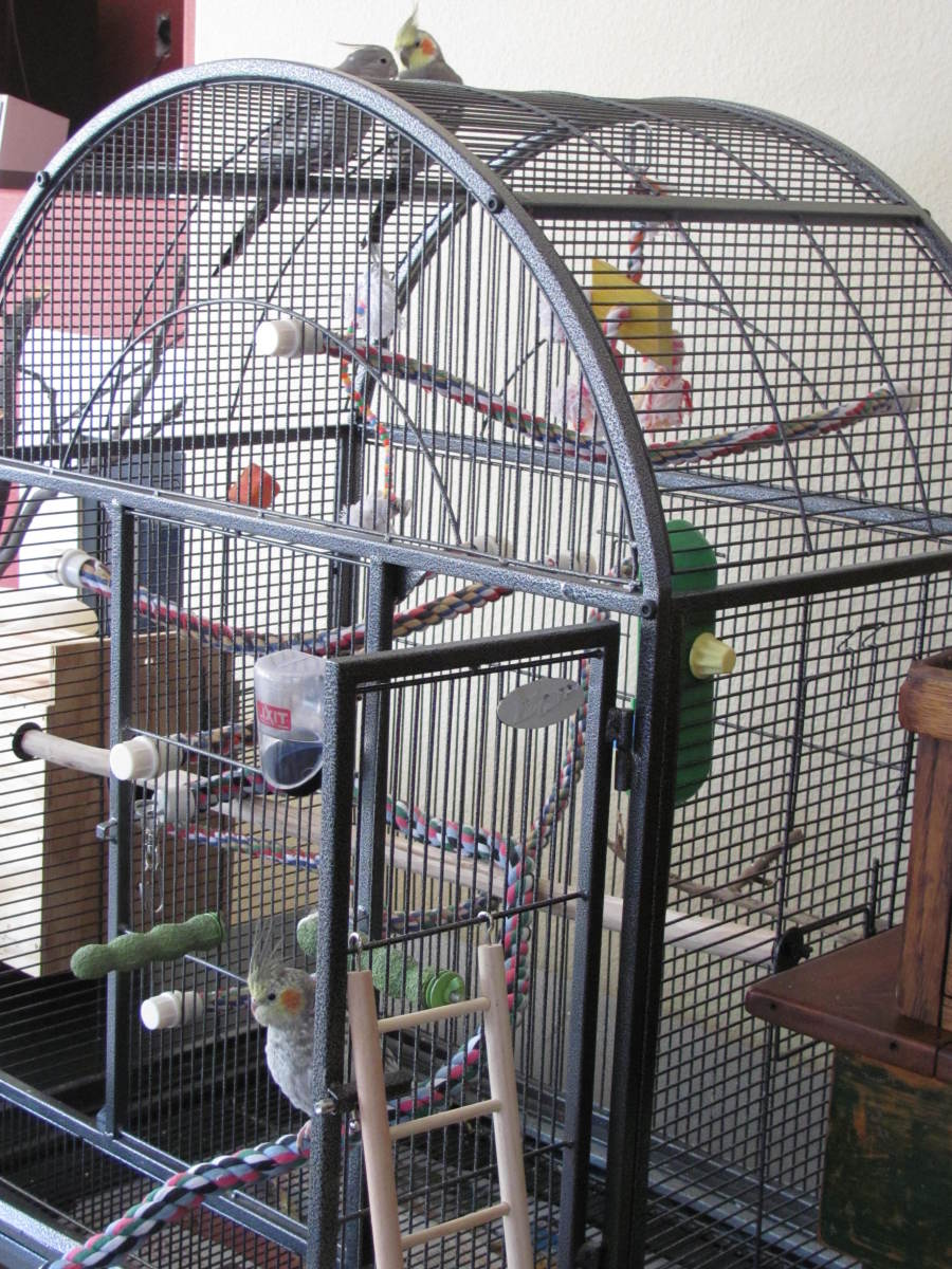 A cage for three cockatiels