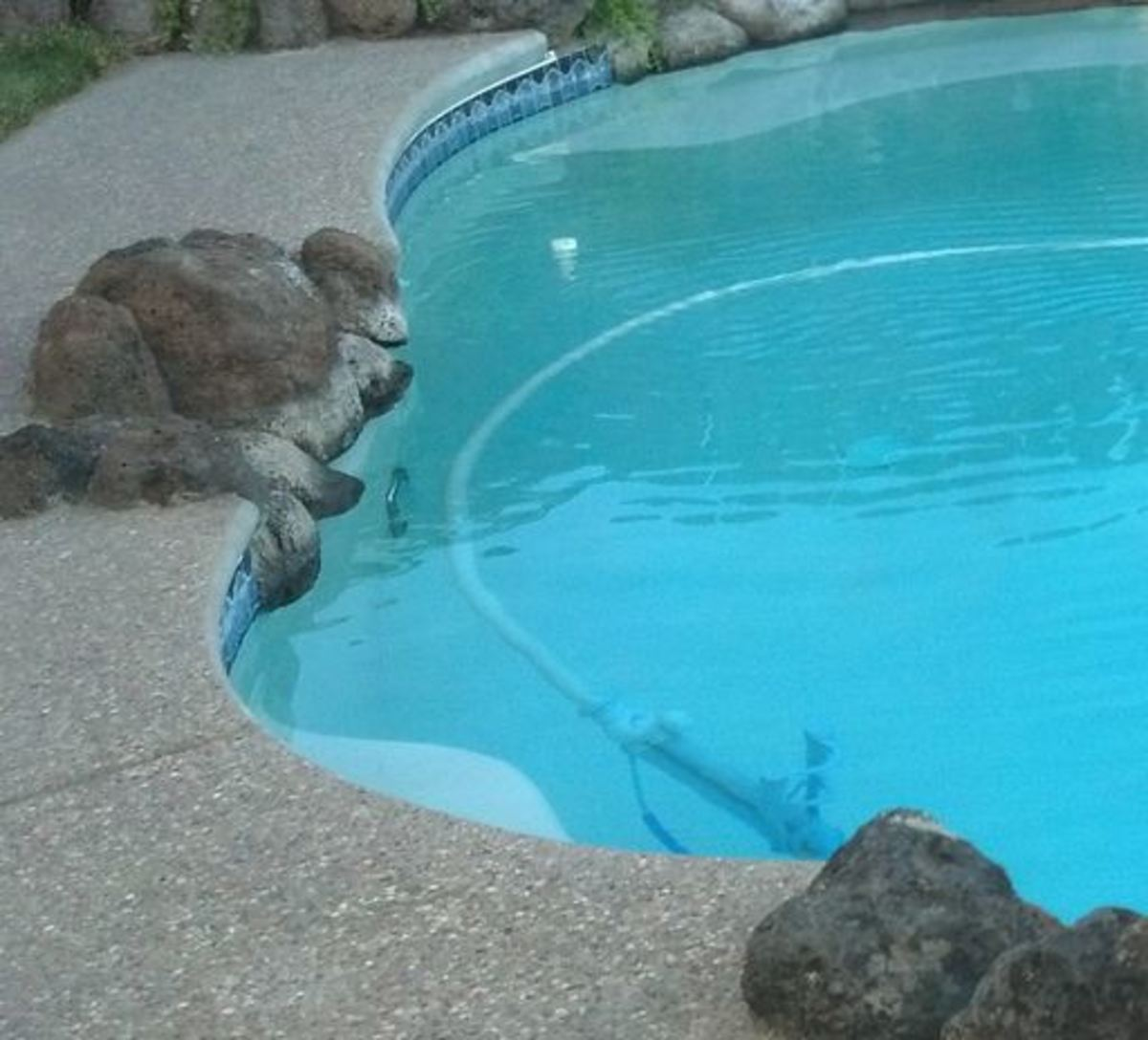 Pool Cleaning with Kreepy Krauly