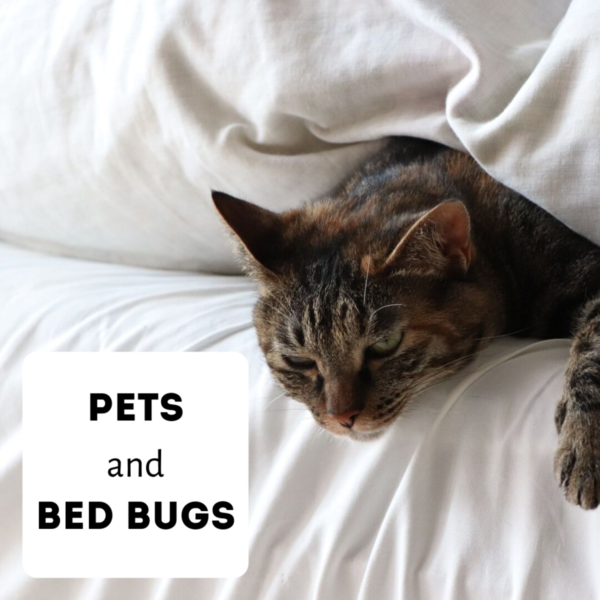 Learn about whether bed bugs pose a danger to your pets.