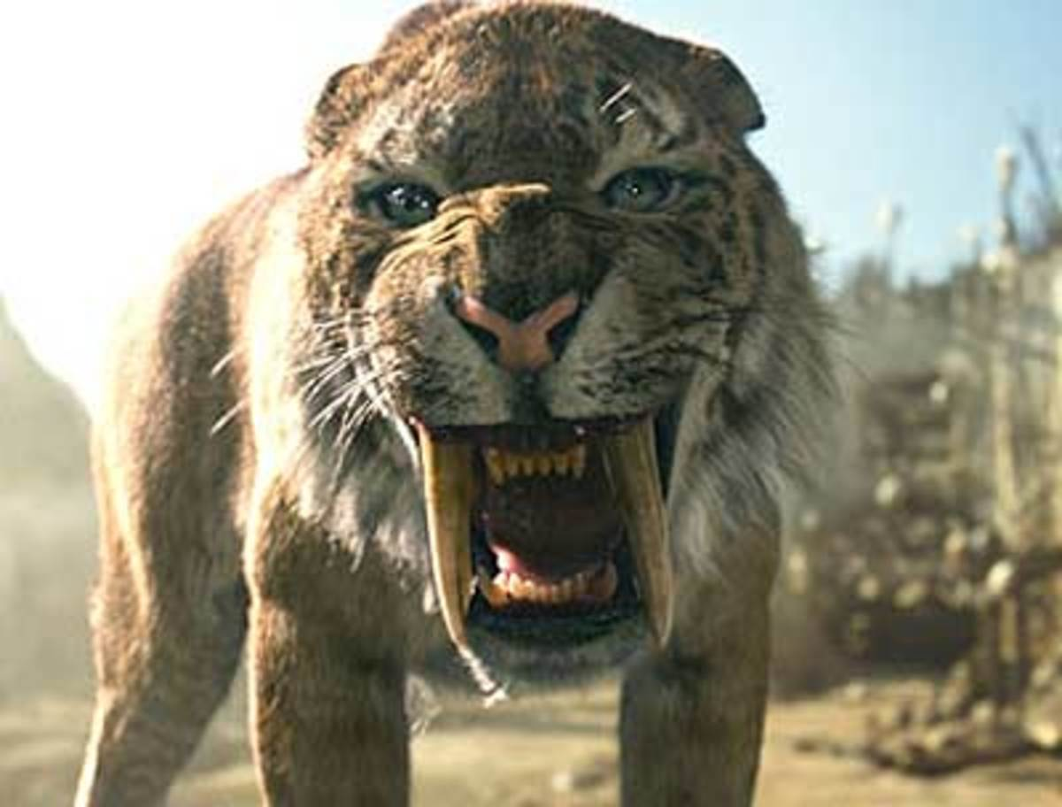 The Saber—Tooth Tiger - Owlcation - Education