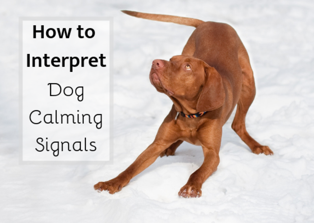 A play bow is one example of a dog calming signal. Learn more about these signals and dog body language.