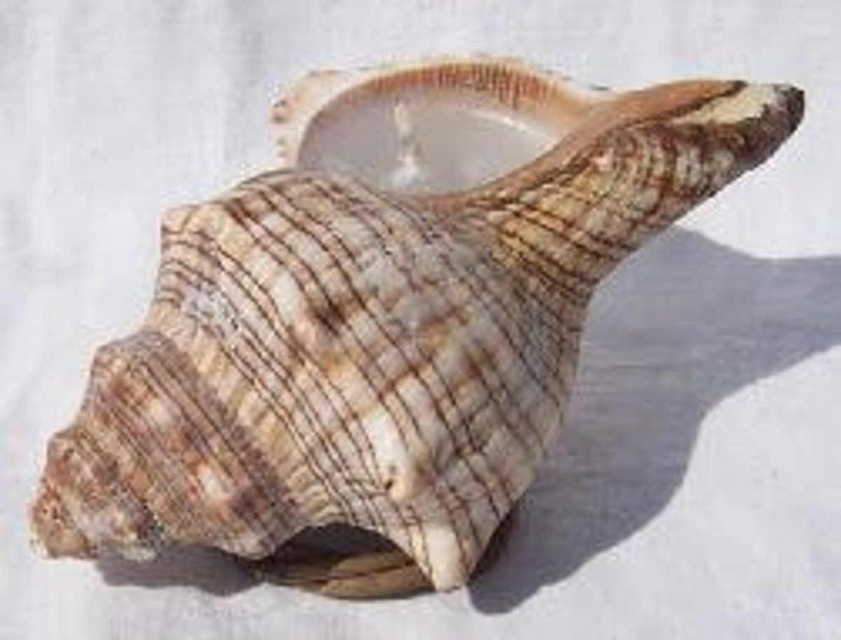 Seashell candle made with a conch shell