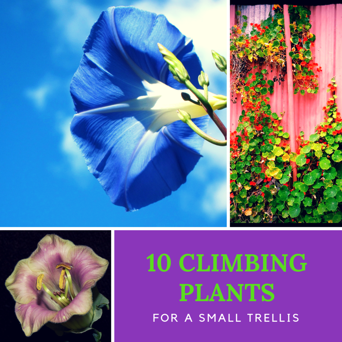 If you're looking for some great climbing plants to grow up a trellis and