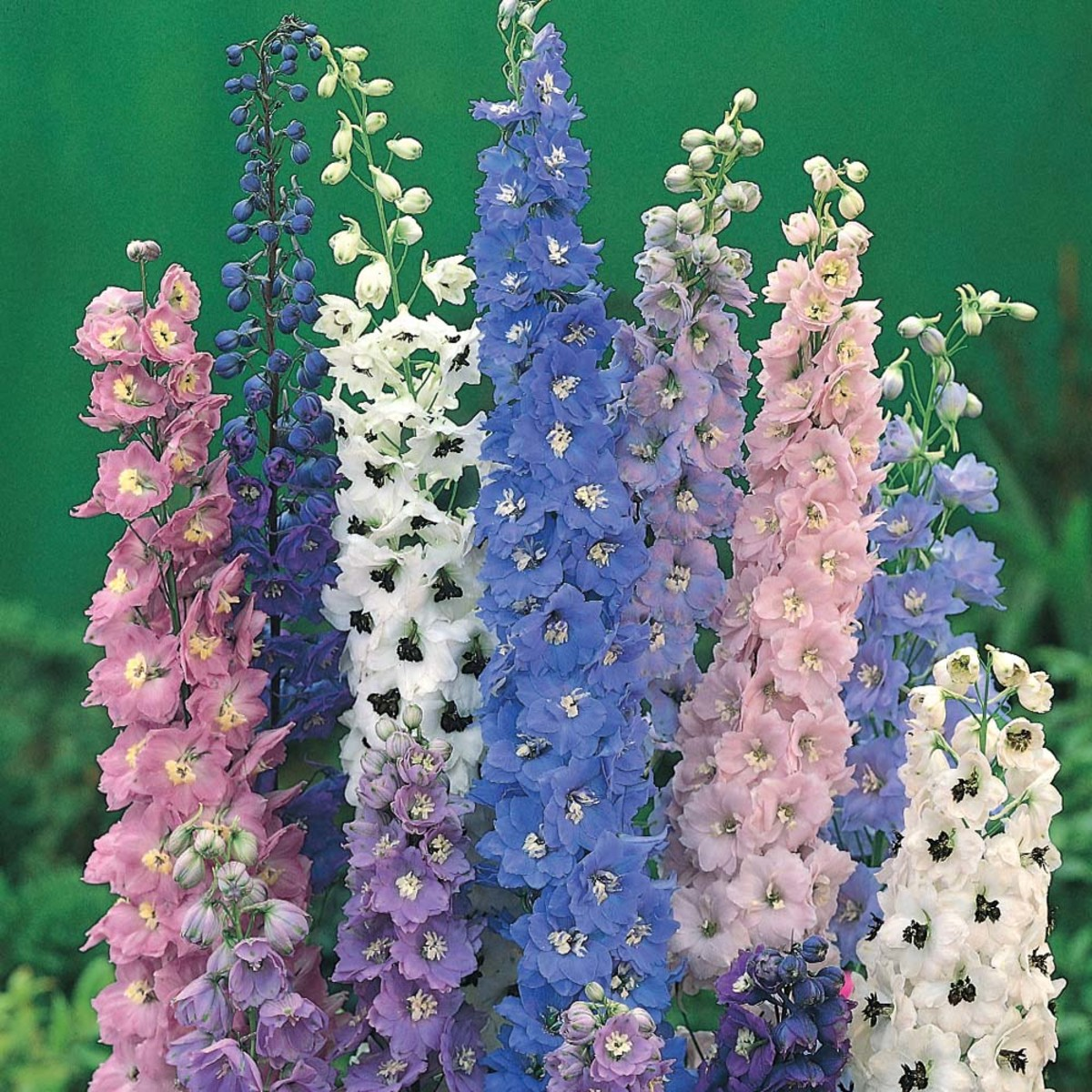 Top 10 Easy Perennial Plants To Grow From Seed Dengarden