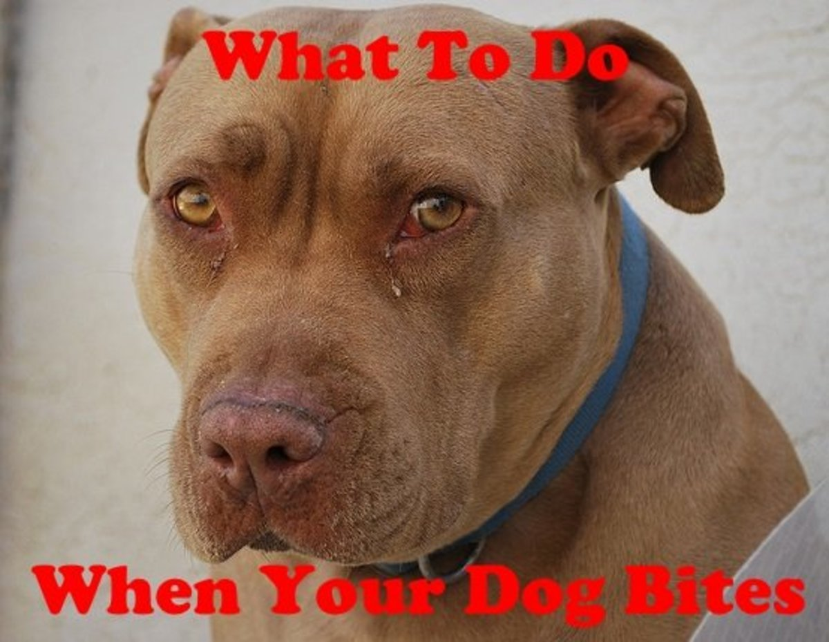 What to do if your dog bites someone.