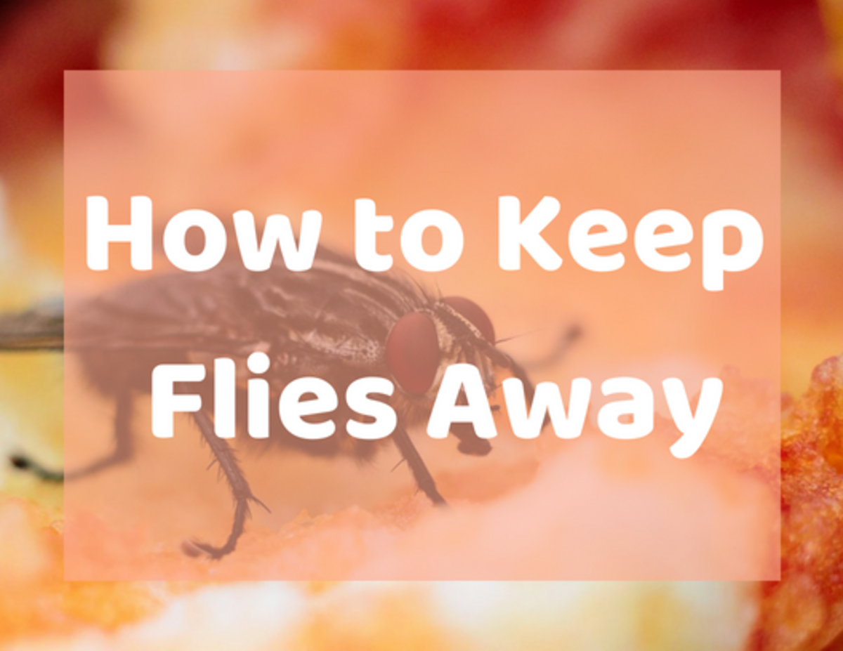 Make sure flies don't come into your home with a few simple steps.