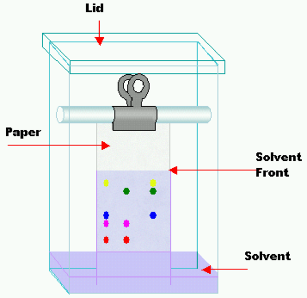 How does paper chromatography work yahoo