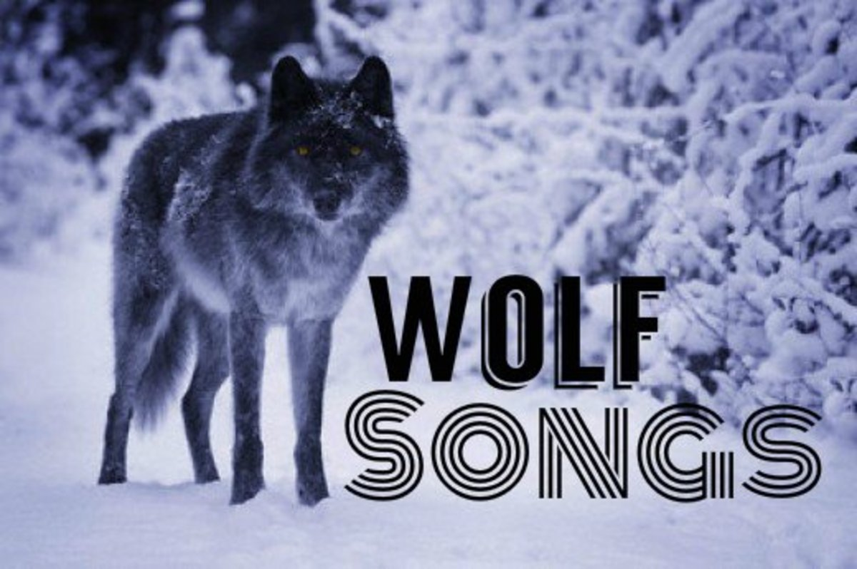 Top 10 Wolf Songs  5c7377f01