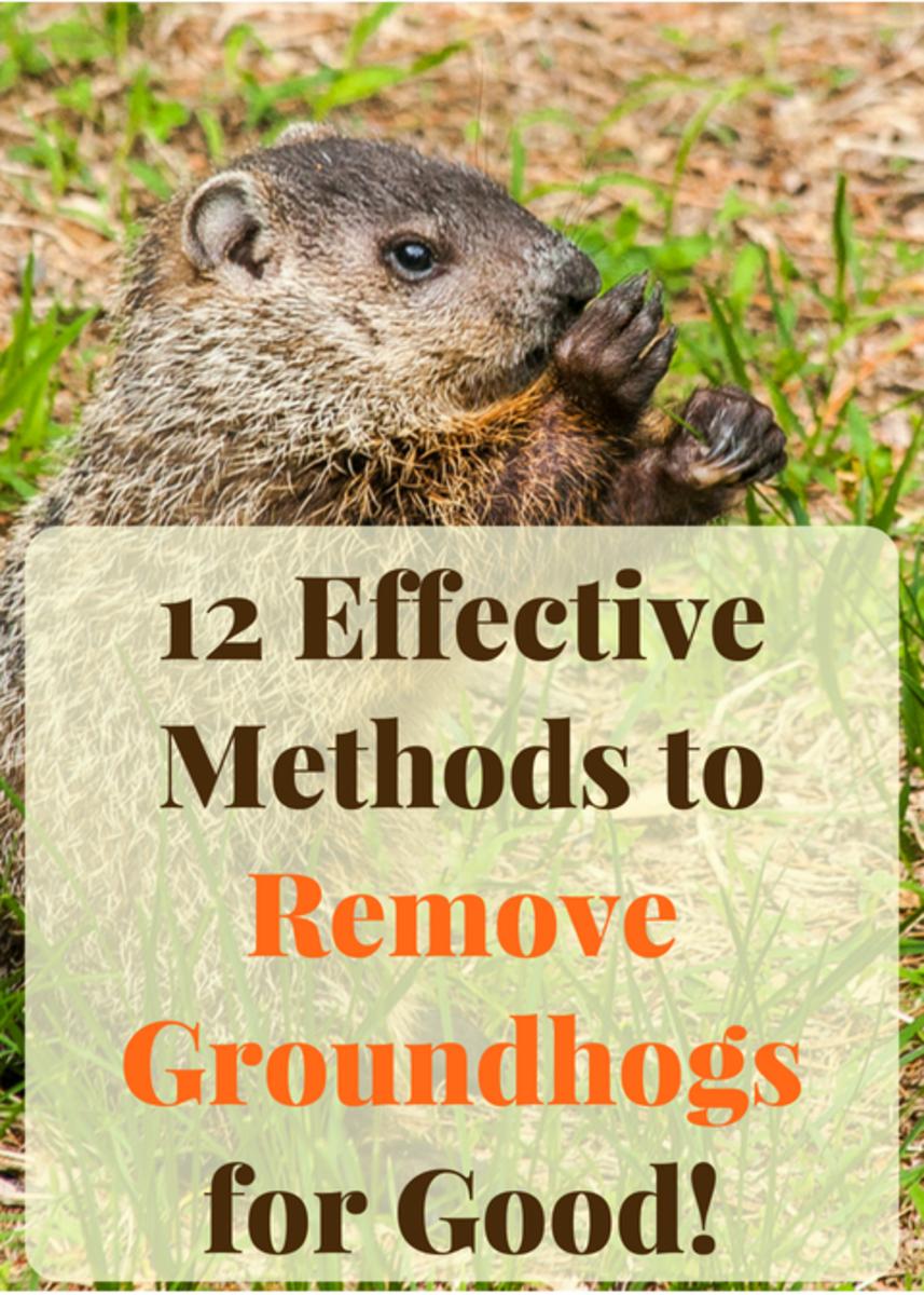 12 Effective Ways To Get Rid Of Groundhogs For Good Dengarden