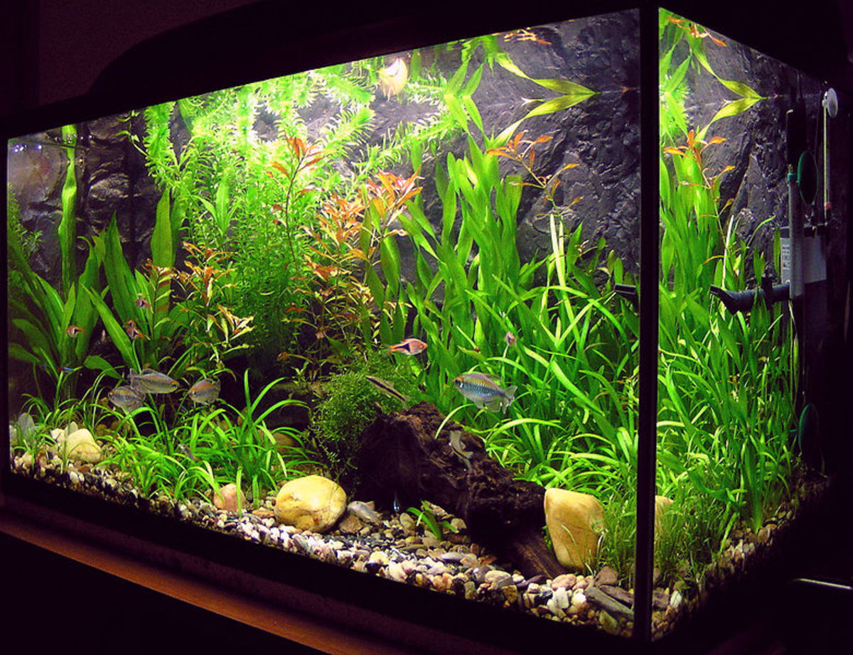 Cycling a new fish tank is essential for keeping the inhabitants alive