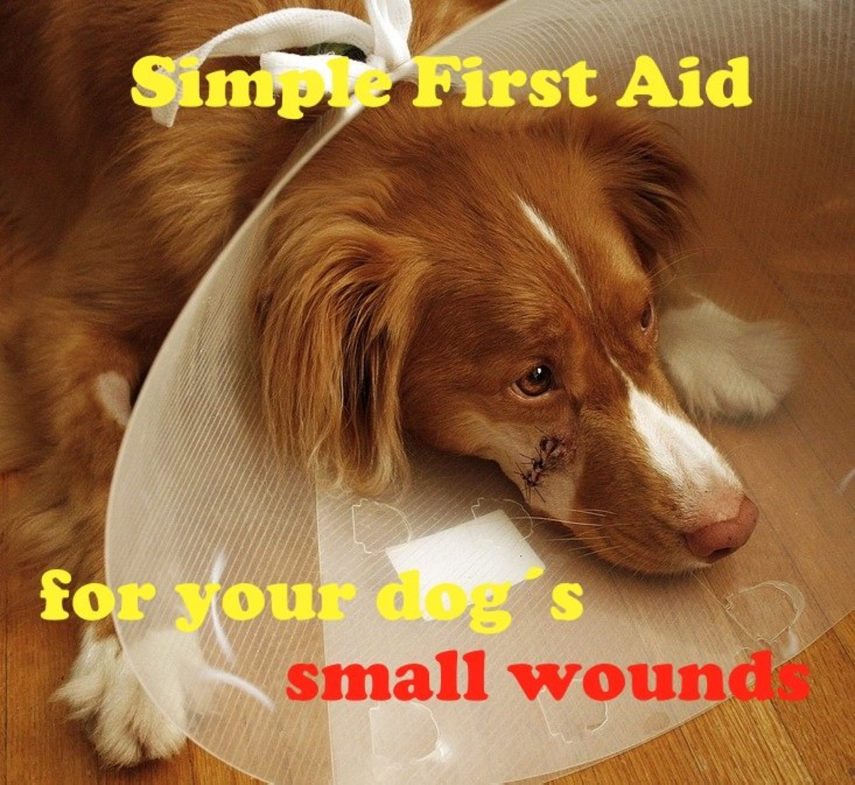 Some dog wounds just need simple first aid at home.