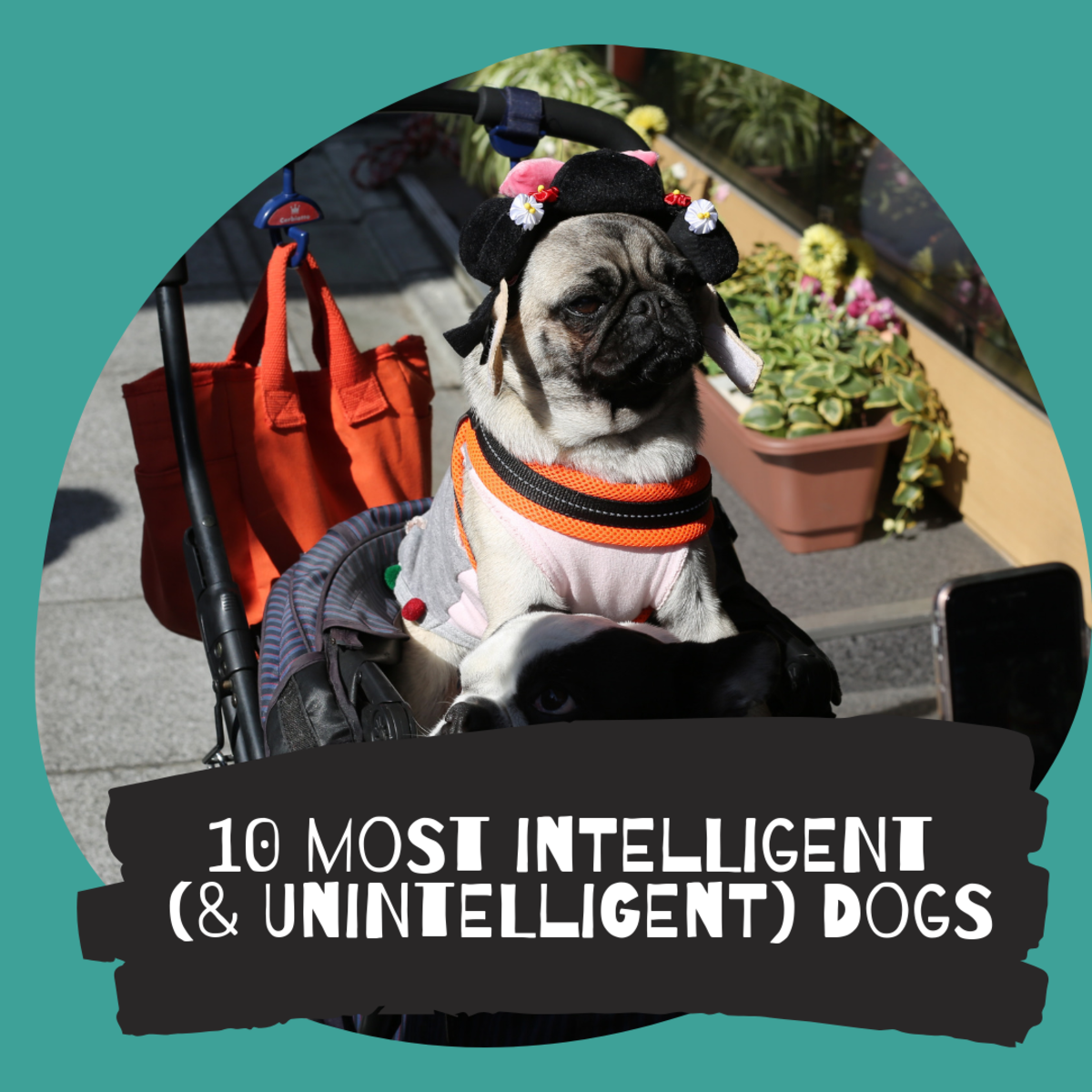Top 10 Most Intelligent Dog Breeds. Really?