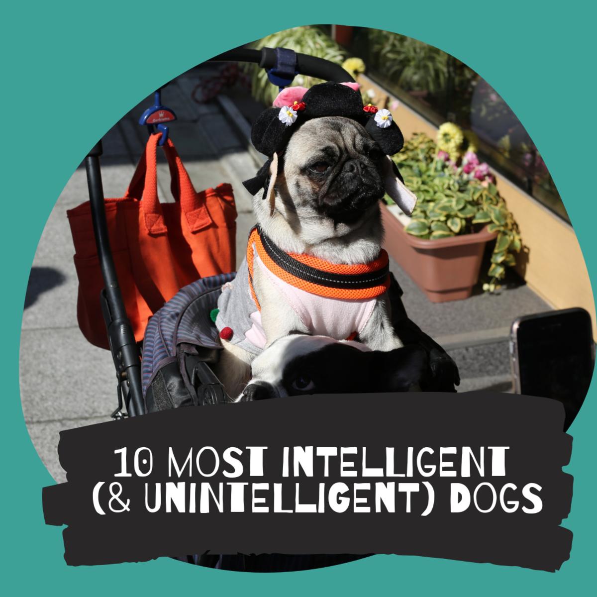 Dog Intelligence Rankings