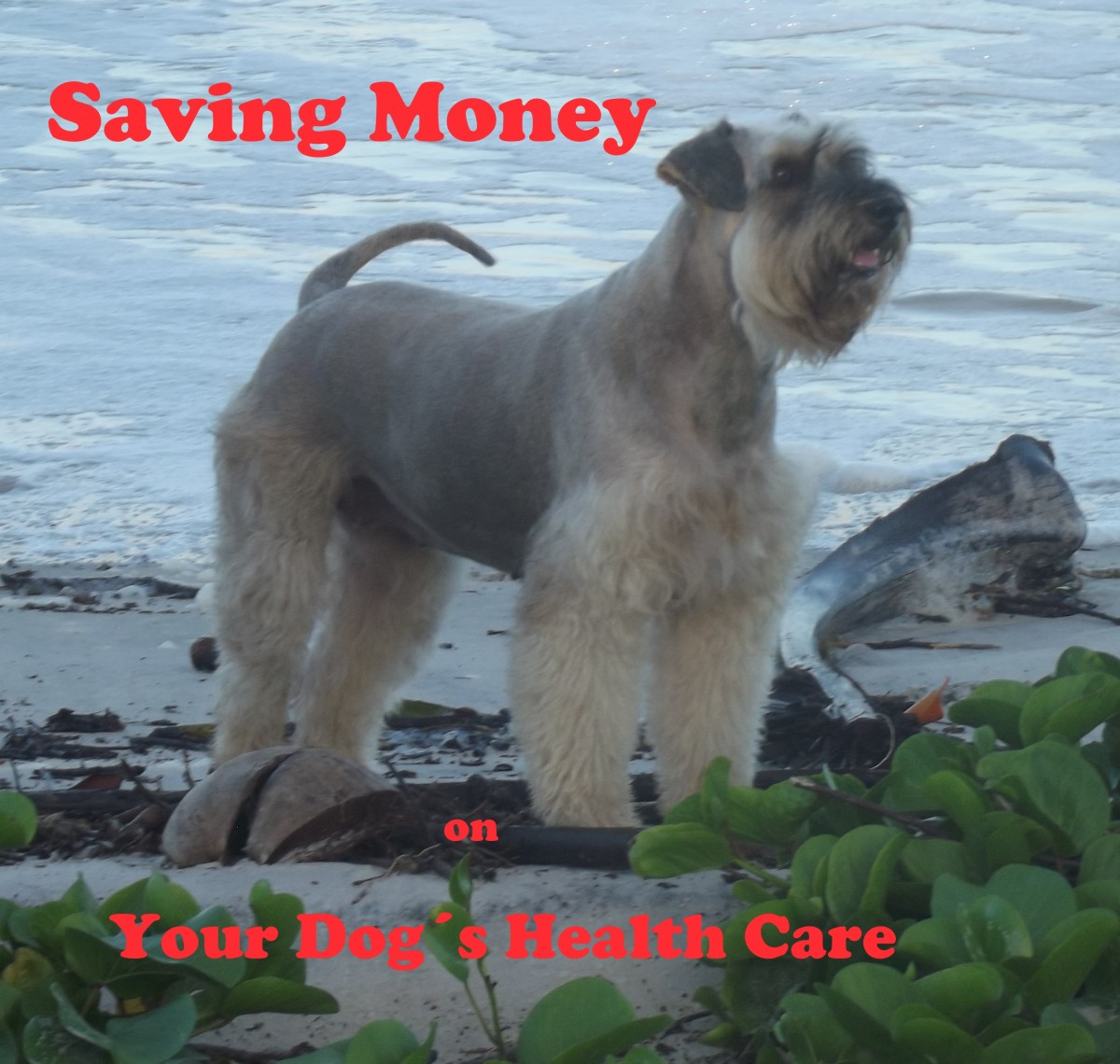Saving money on your dog´s health care will allow you both more time together.