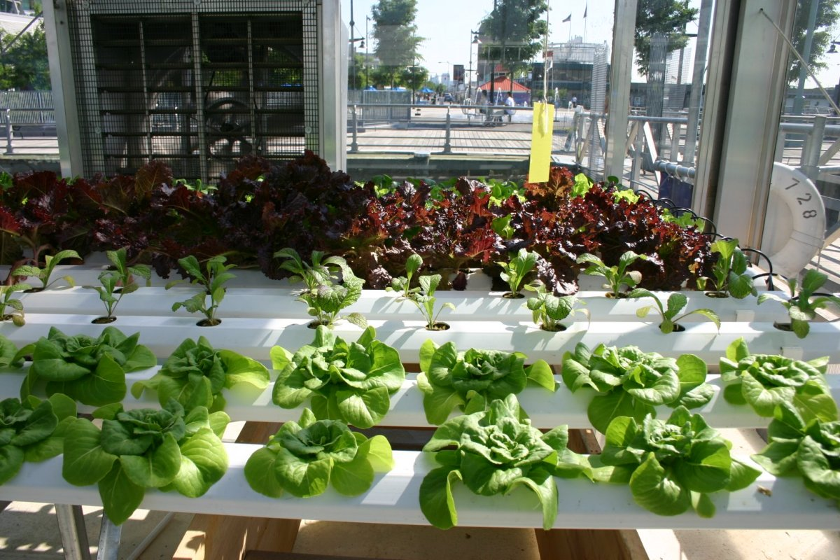 Professional hydroponic setups predated the smaller, vertical ones.