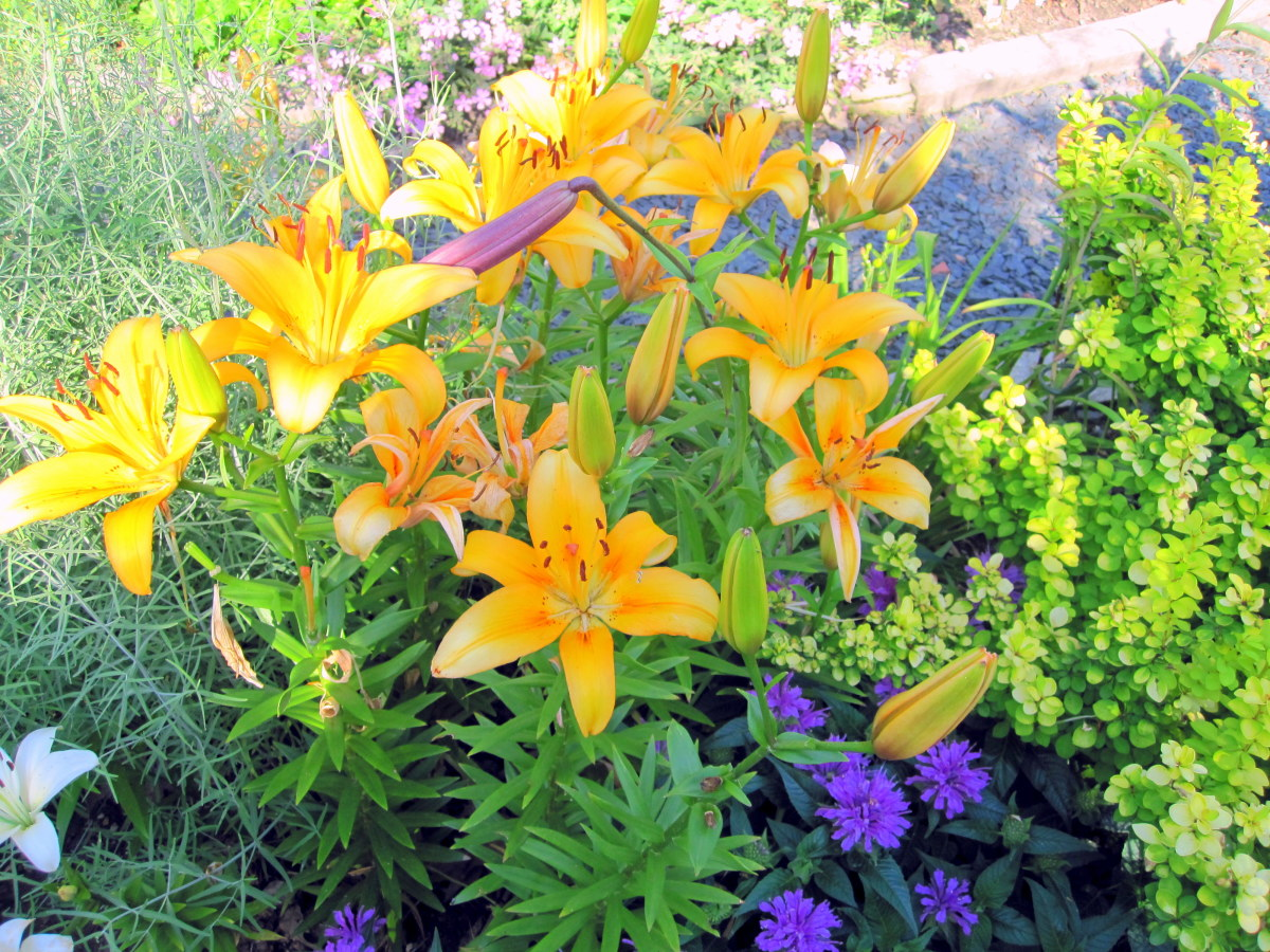 7 Garden Design Ideas From the