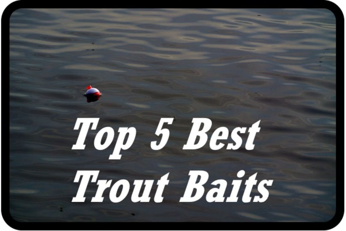 top-5-trout-baits