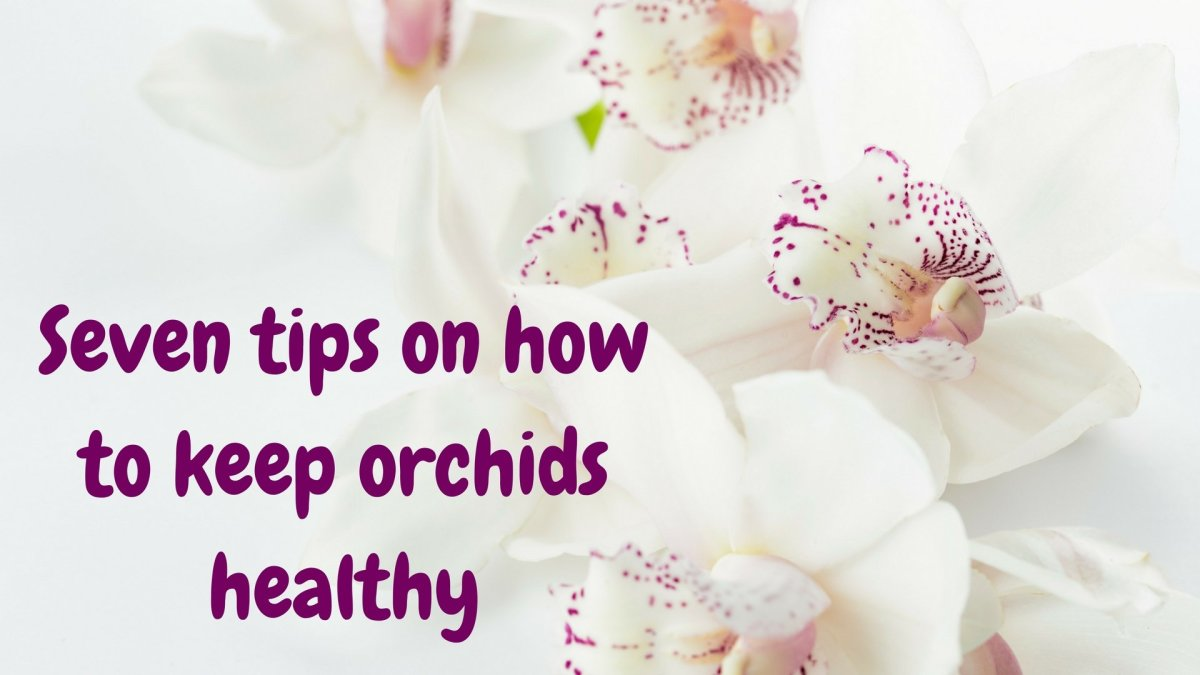 Seven Tips on How to Keep Orchids Beautiful and Healthy