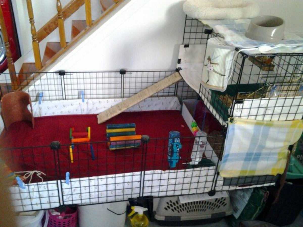 The entire cage is 2x4 panels with a single-width second floor