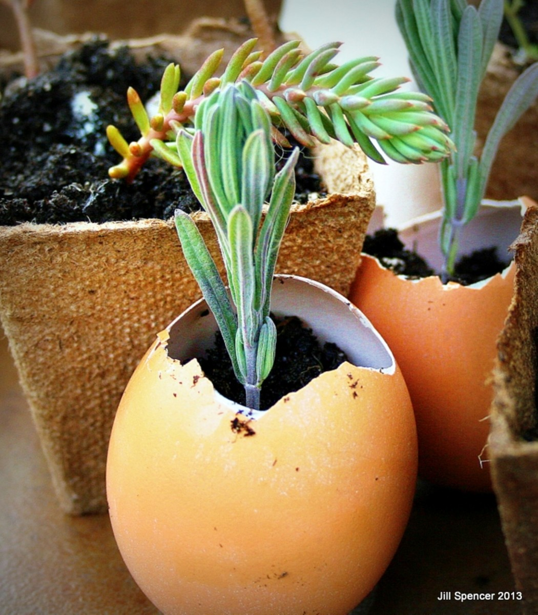 How to Grow Herbs Easily