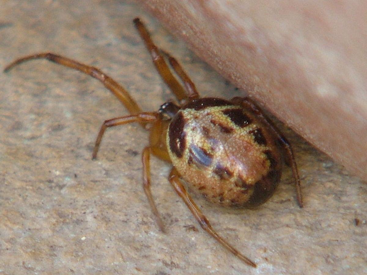 Invasive Species in the UK– Spiders, Scorpions, and Slugs