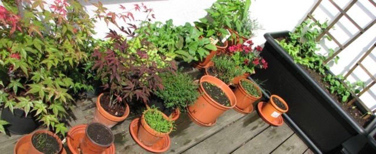 How to plan a balcony garden