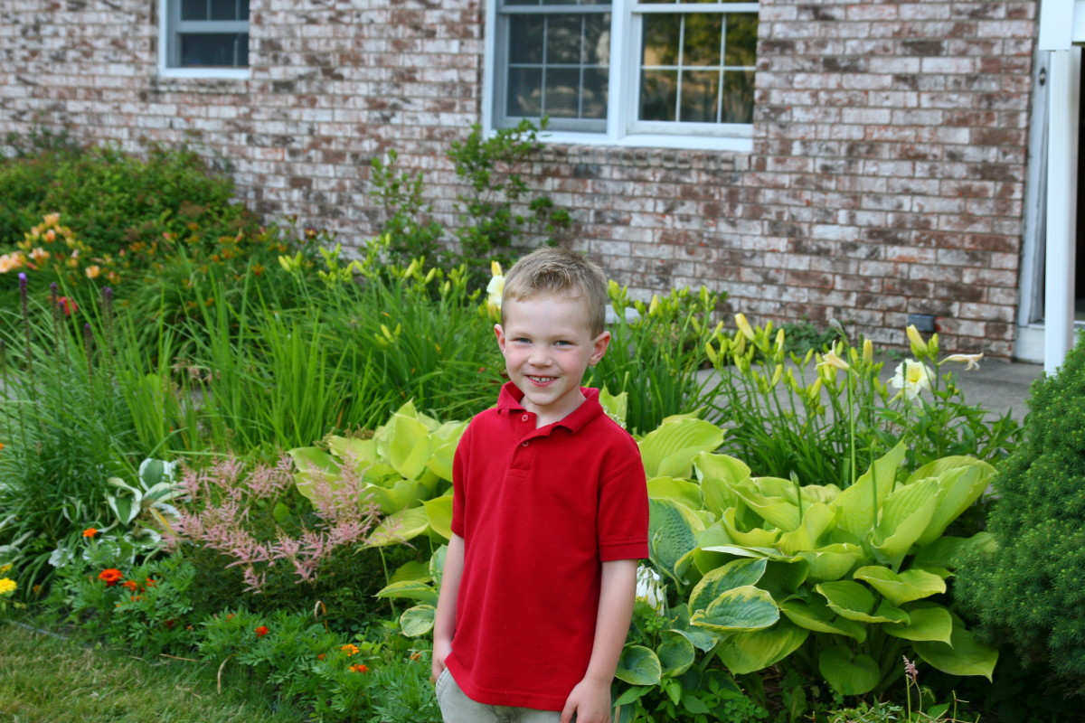 My son in front of our zone 5 garden: hostas, astilbe, and daylilies grow in a lush front border.