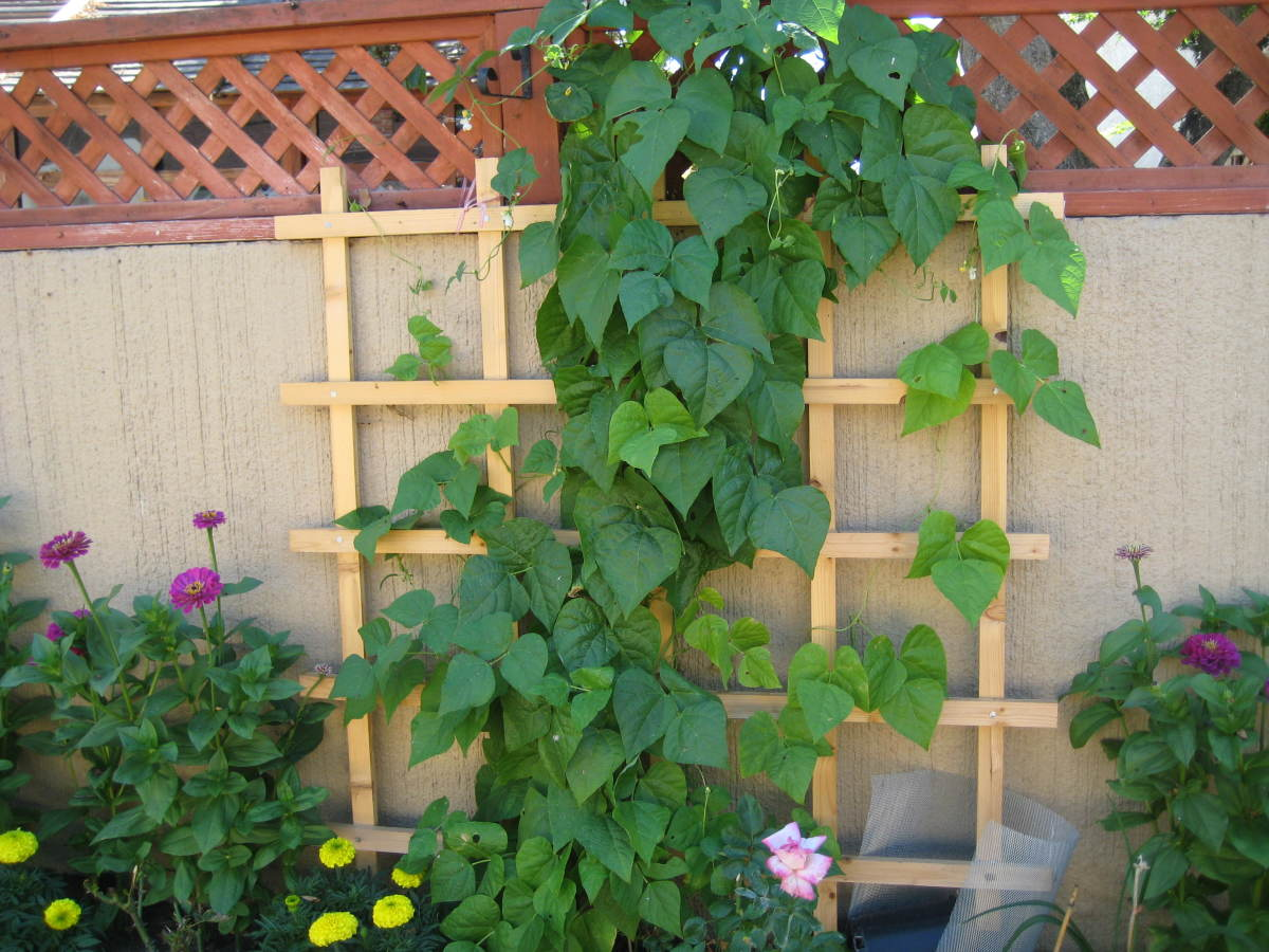Easy Backyard Vegetable Garden Ideas : Easy Vertical Gardening Ideas for Beginners