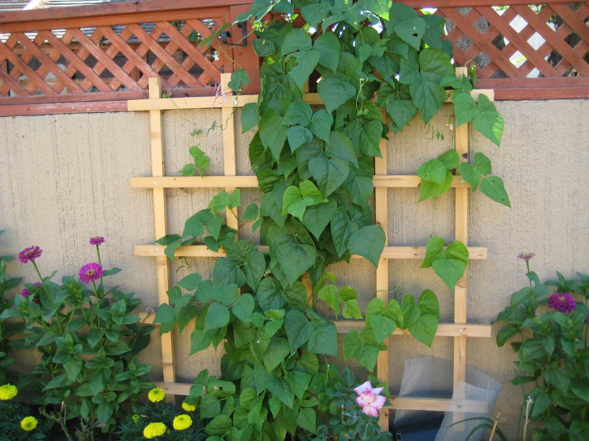 Easy vertical gardening ideas for beginners - Vegetable garden ideas for beginners ...