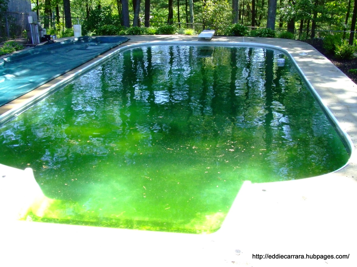 I have never experienced a pool this green.  Can see the black algae?