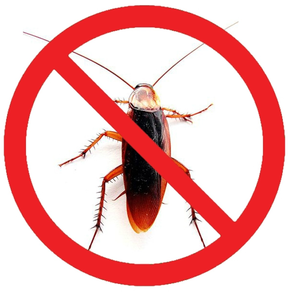 Get Rid of Roaches Yourself