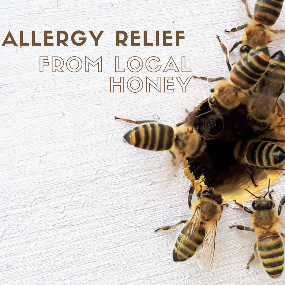 Benefits From Local Raw Honey for Allergy Relief
