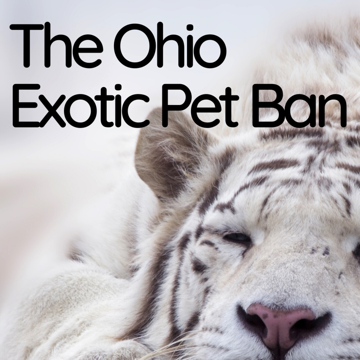 The Ohio Exotic Pet Ban: What Animals Are Now Illegal as Pets?