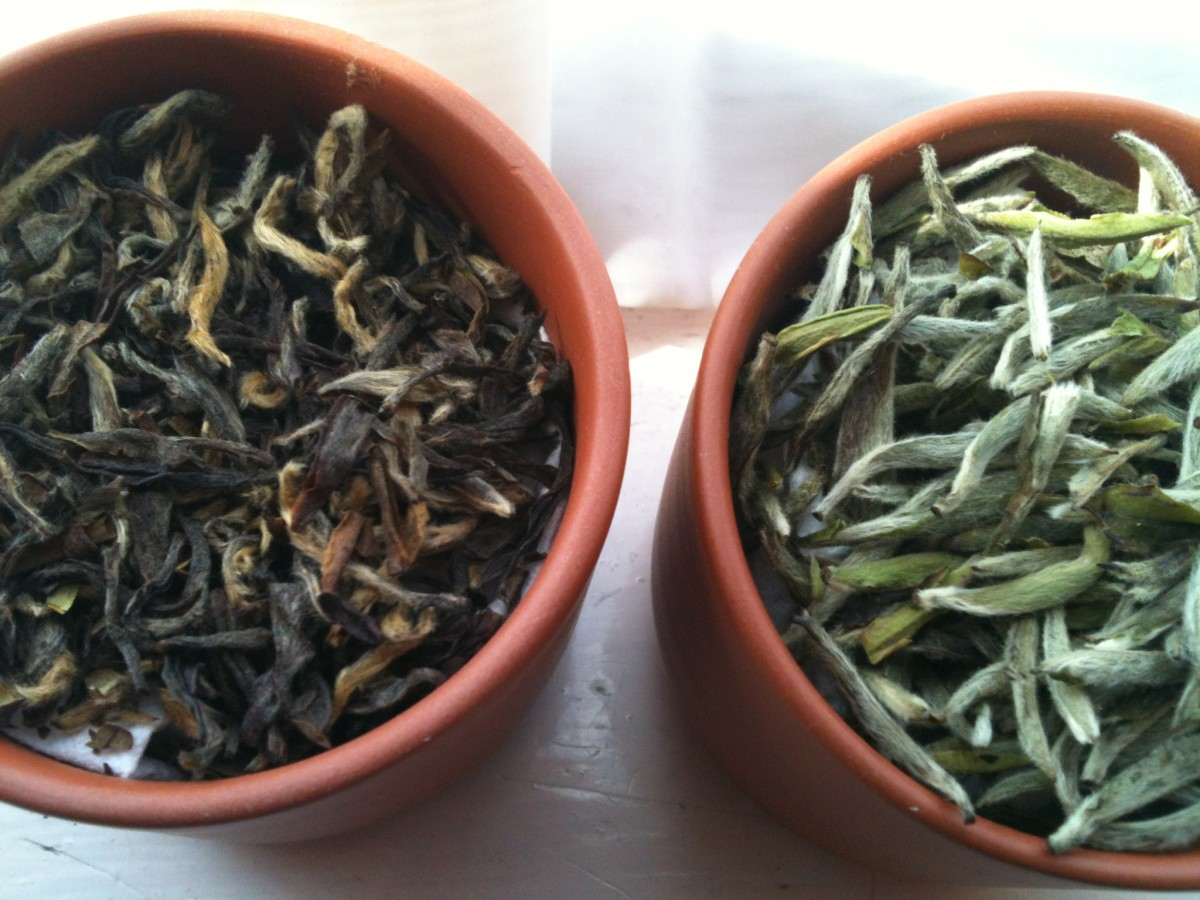 Loose-leaf Ye Sheng Wild White Tea (left) and Silver Needle White Tea (Right)