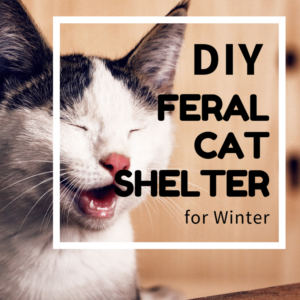 A DIY feral cat shelter project.