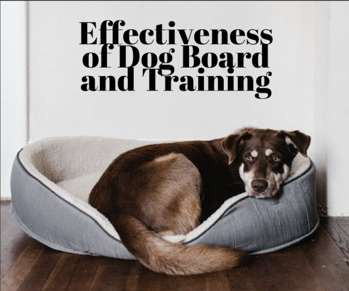 How effective is dog board and training? Read on to find out.