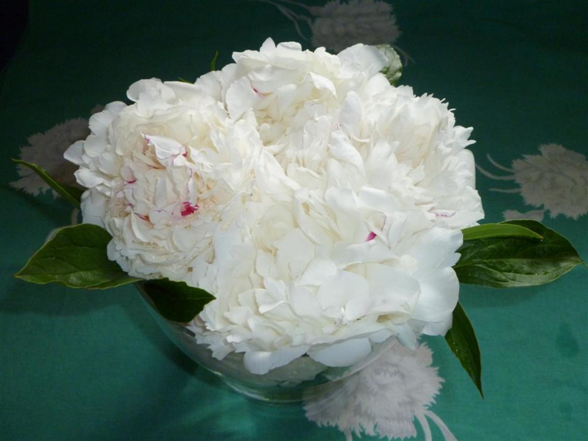 Peonies in a flower pot vase.