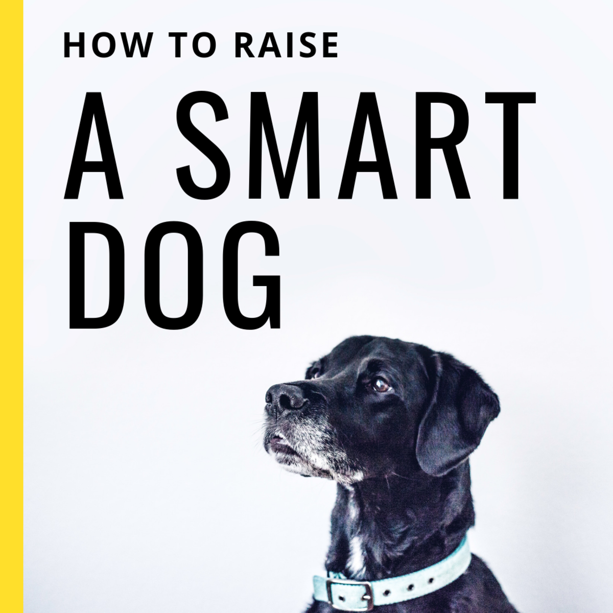 Though the Internet might try to tell you otherwise, any dog can be trained to be smarter.