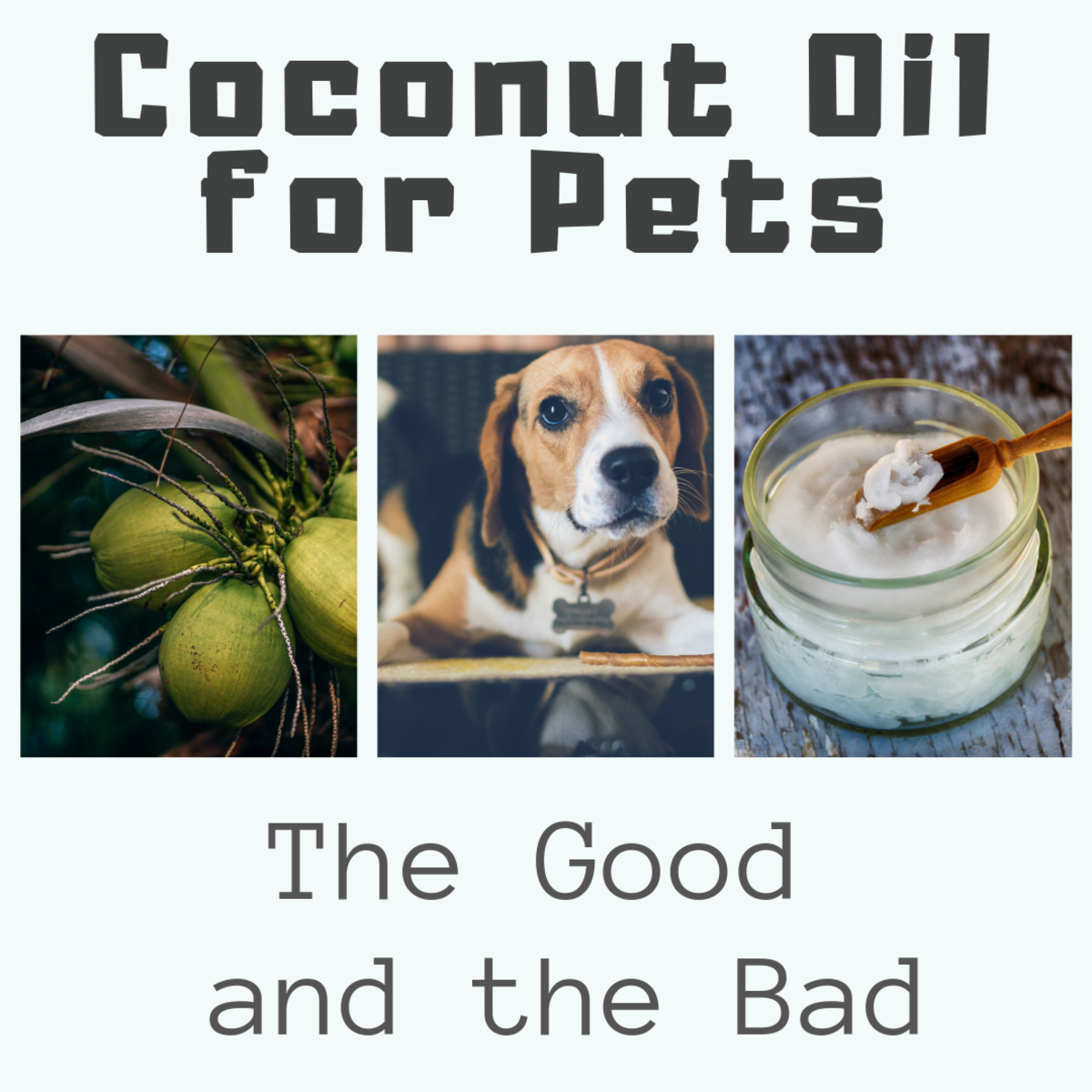 Coconut Oil for Dogs and Cats: The Good and the Bad