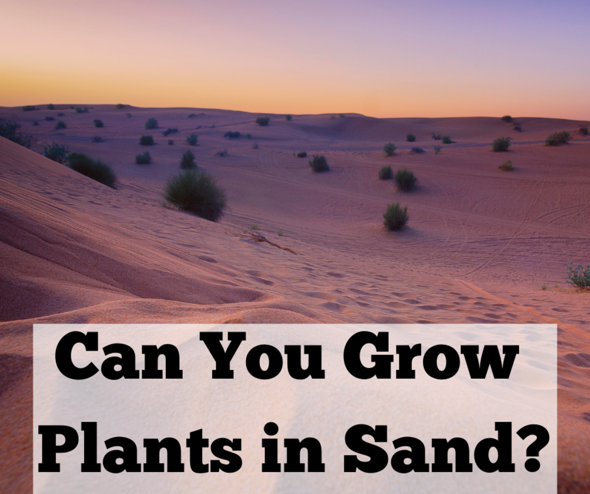 Can Plants Grow in Sand?