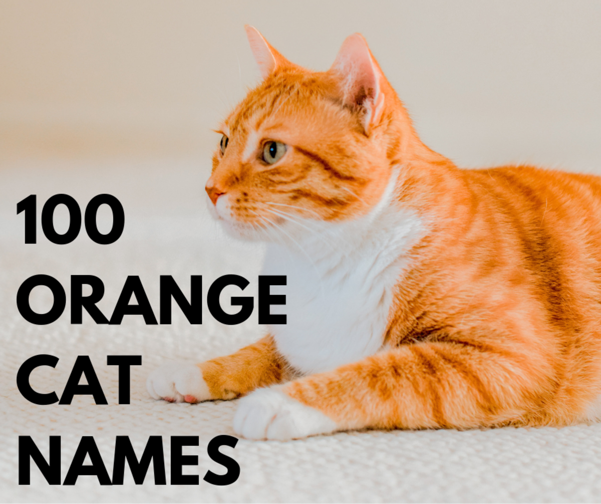 Top 100 Orange Cat Names