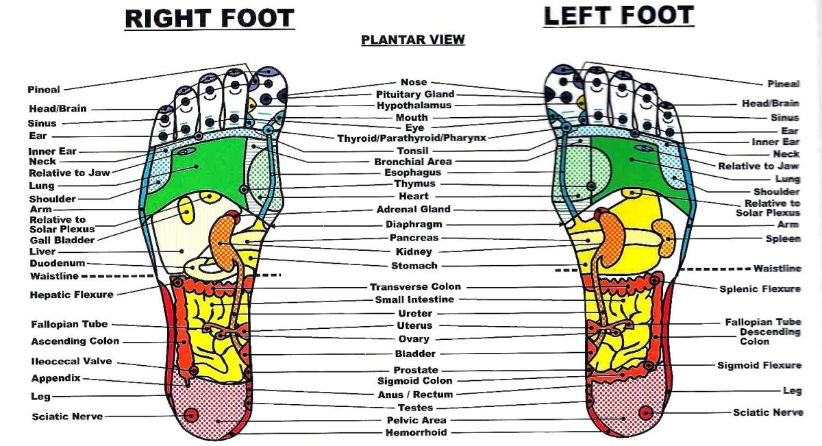A standard foot reflexology chart.