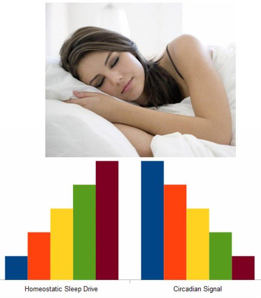 the-science-behind-why-we-sleep