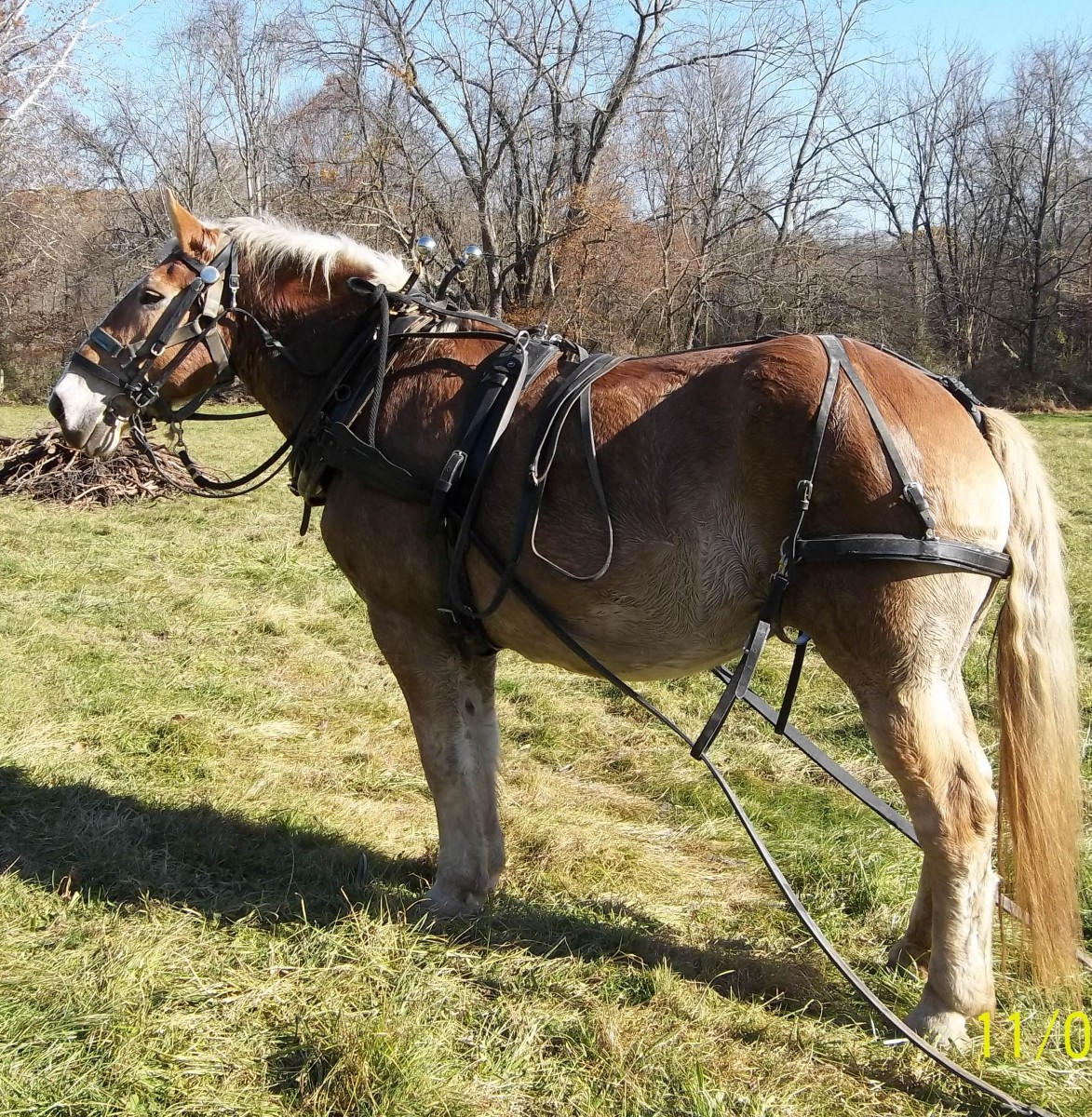 Working with Draft Horses on a Small, Sustainable Farm