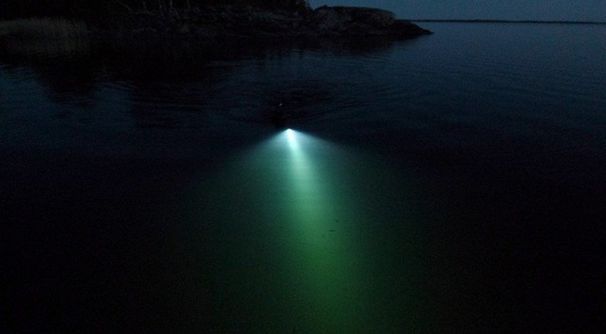 Spearfishing with a dive light at night.